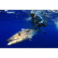 Selecção Pesca no Azul